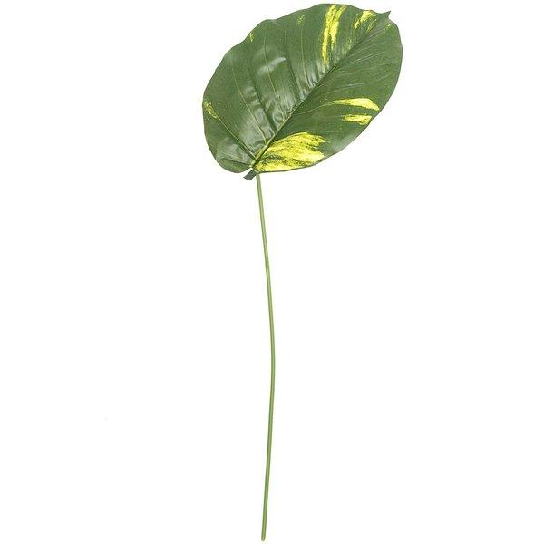 Araceae-Blatt grün 78cm