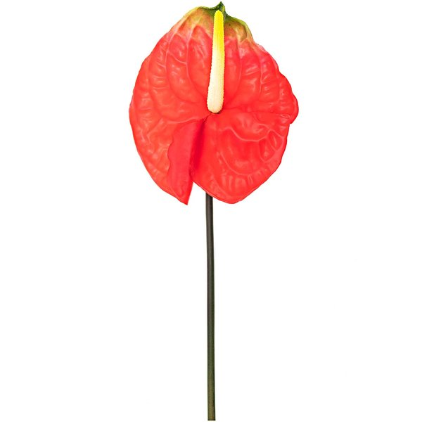 Anthurie rot-grün 68cm