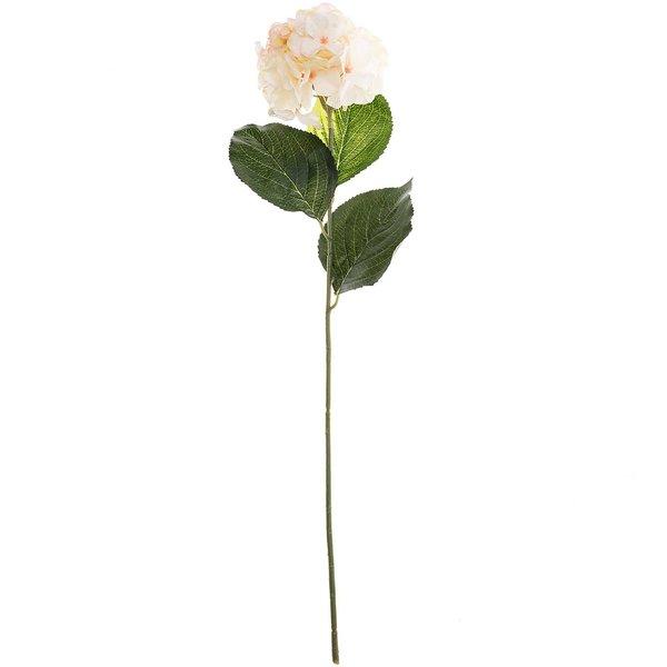 Hortensie zartlachsrosa 75cm