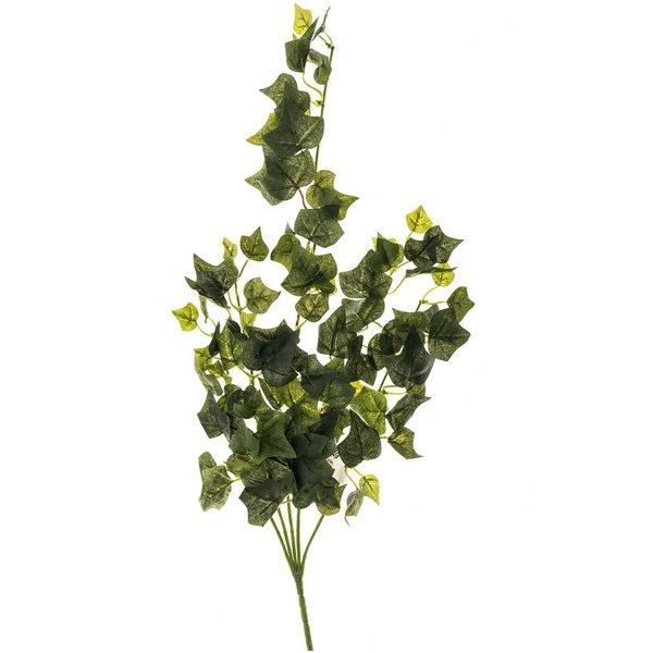 Efeu mit 5 Ästen grün