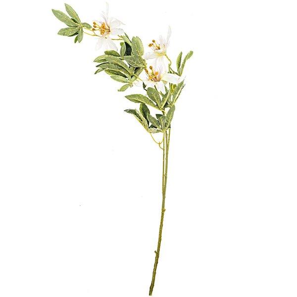 Clematis weiß 90cm 3 Blüten